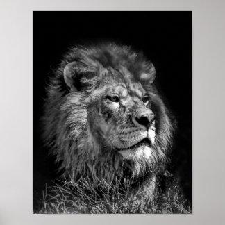 Stolt ungt lejont poster