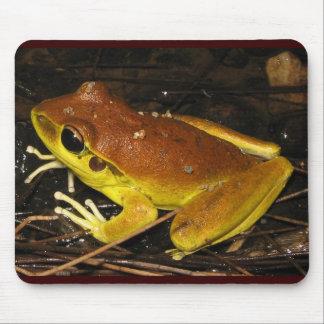 Stoney bäckgroda - Litoria wilcoxi Musmatta