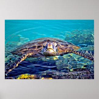 Stor affisch för öhavssköldpadda poster
