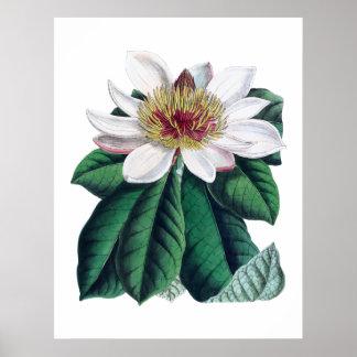 Stor blomma Cusion för Magnoliavit Poster