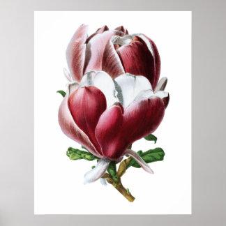 Stor blommaaffisch för rosa magnolia poster