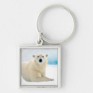 Stor galt för vuxen polar björn på sommarisen fyrkantig silverfärgad nyckelring