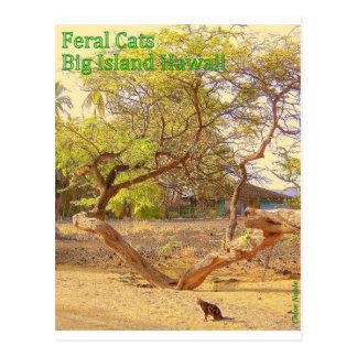 Stor ö Hawaii för vilda katter Vykort