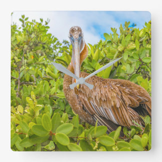 Stor pelikan på träd, Galapagos, Ecuador Fyrkantig Klocka
