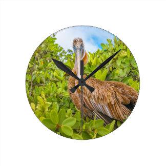 Stor pelikan på träd, Galapagos, Ecuador Rund Klocka