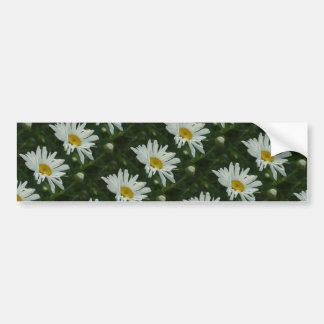 Stora blommor för vit- och gultdaisyAster Bildekal