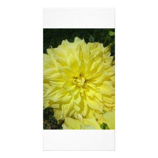 Stora gula Dhalia Fotokort