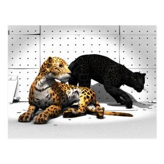 Stora katter - Leopards Vykort