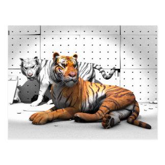 Stora katter - tigrar vykort