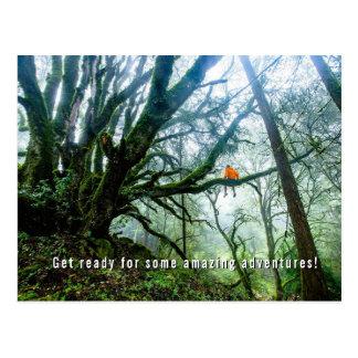 Stora träd som förbluffar äventyrlärare, noterar vykort