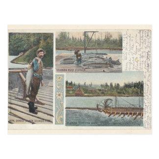 Störlaxen rullar vykortet vykort