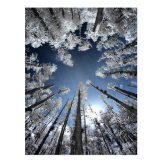 Storslagna Cypress Vykort