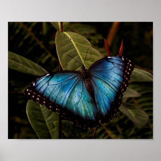Stort härligt, blåttfjäril poster
