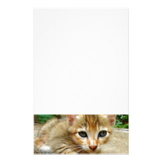 Stort öga kattunge brevpapper