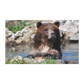 Sträckt kanfas för Grizzly björn Canvastryck