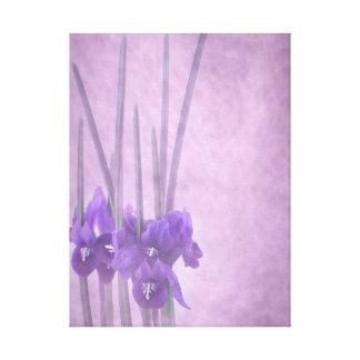 Sträckt kanfas för Iris reticulata Canvastryck