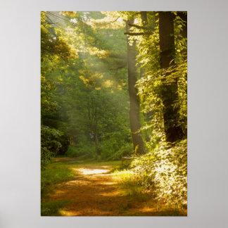 Strålar av ljust i skogen affisch