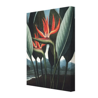 Strelitzia fågel av paradisblommigtkanfas canvastryck