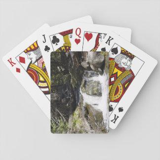 Strömma i rocky mountains som leker kort spel kort