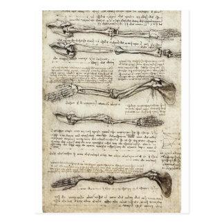 Studier av armen vykort