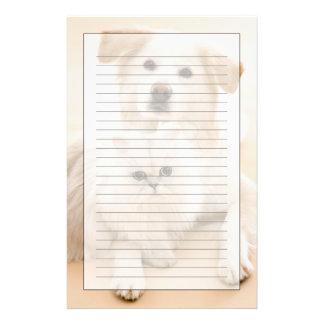 Studio som skjutas av katt och hunden brevpapper