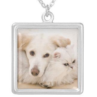 Studio som skjutas av katt och hunden silverpläterat halsband