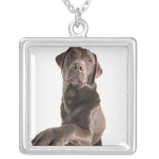 Studioporträtt av choklad Labrador Silverpläterat Halsband