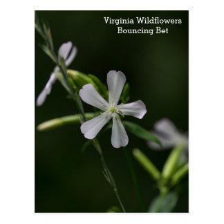 Studsa vykortet för vildblommar för vadVirginia Vykort