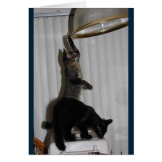 Styggt kattungefödelsedagkort hälsningskort