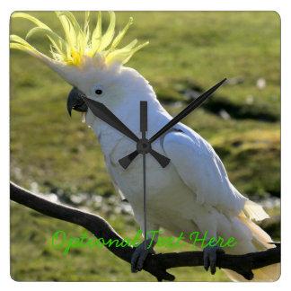 Sulphur-Krönad kakadua i Australien Fyrkantig Klocka