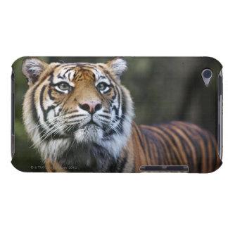 Sumatran tiger (Pantheratigris sumatrae) Barely There iPod Överdrag