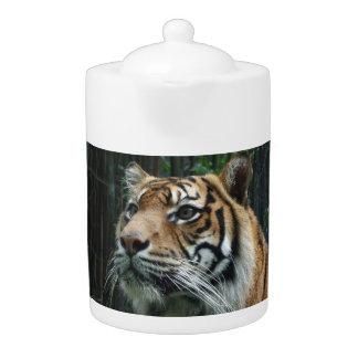 Sumatran tigertekanna