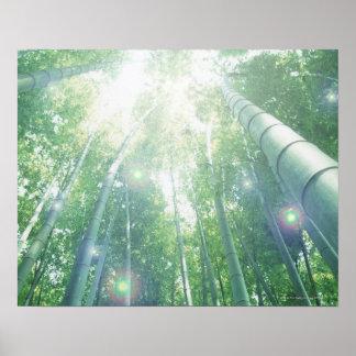 Sunbeams som är glänsande till och med bambur poster