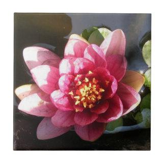 Sunlit mörk rosa näckrosblomma kakelplatta