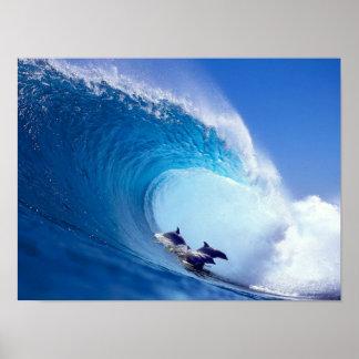 Surfa delfiner poster