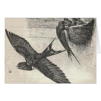 Svalafågelbo Hälsningskort