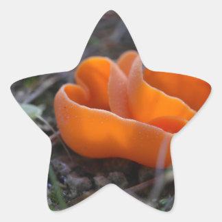 Svamp för orange peel, Aleuria aurantia Stjärnformat Klistermärke