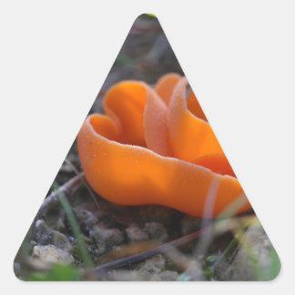 Svamp för orange peel, Aleuria aurantia Triangelformat Klistermärke
