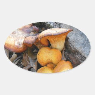 Svamp orange fotografi för skog ovalt klistermärke