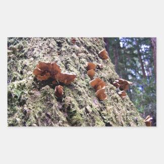 Svampar på redwoodträdskäll rektangulärt klistermärke