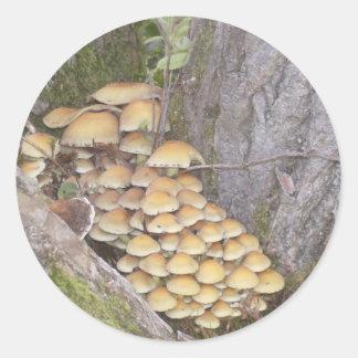 Svampar på träd runt klistermärke