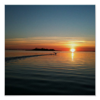 Svan på solnedgången poster