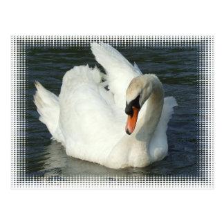 Svan sjö vykort