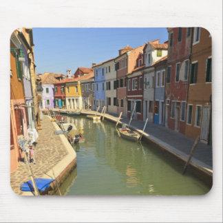 Svanar i kanalen, Burano ö, Venedig, italien Musmatta