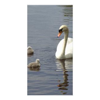 Svanfamilj med mamman och ducklings eller cygnets fotokort