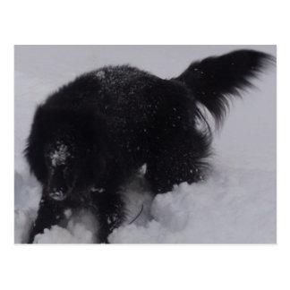 Svart belgisk herde i snön vykort