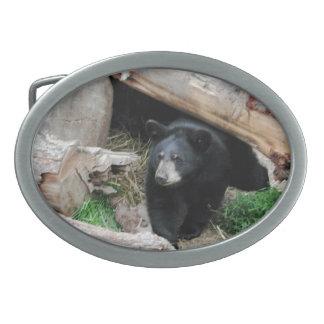 Svart björn - amerikandäggdjursamling
