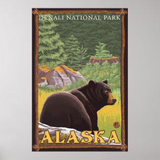 Svart björn i skogen - Denali nationalpark, AK Poster