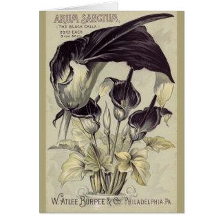 Svart Calla Lillies för vintage Hälsningskort