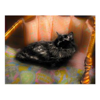 Svart drömma för katt vykort